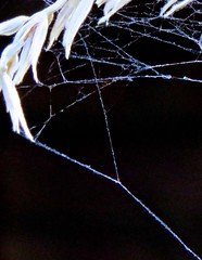 Physics Of Elementary Particles Captured In Blue Indian Corn Cloud Chamber (Chic Bee) Tags: insect spider web arch minimalist minimalism unusual macro small life abstract physics sonorandesert tucson arizona southwesternusa americansouthwest northamerica