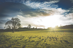 Holy Sheep! (der_peste) Tags: scotland sun backlight sheep landscape clouds cloudscape evening carnasserie argyllandbute sunstar sunlight backlit animals lawn meadow grass shadows light