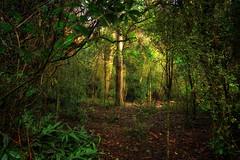 The Secret Place (Kevin_Jeffries) Tags: nativebush bush foliage nature nikon nikkor kevinjeffries secretplace d7100 green newzealand fauna woods