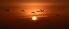 I should have known you'd bid me farewell. (Jill Bazeley) Tags: sunrise sun pelicans silhouette florida beach atlantic ocean nikon d7000 space coast 70300mm vr