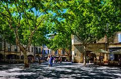 La place aux Herbes baignée de soleil Provençal (didier95) Tags: placeauxherbes uzes provence gard languedocroussillon village occitanie arbre place ete été scenedevie