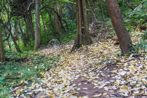 ramkhamhaeng national park - thailande 17