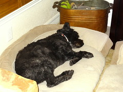 Nessie Dreams (austexican718) Tags: household family dog guard protect warn canine animal pet hurricane