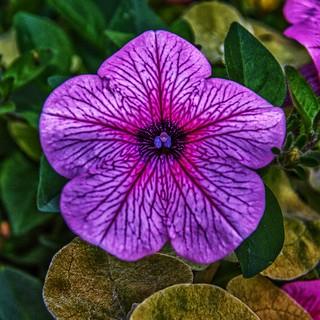Toronto Ontario ~ Canada ~ Edwards Gardens ~ Botanical Garden ~ Purple Flower