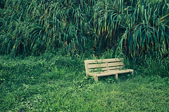 forest lovers (igo.rs) Tags: field old summer bench grass green secret garden vegetation time coconut tree late chill out big myrtle