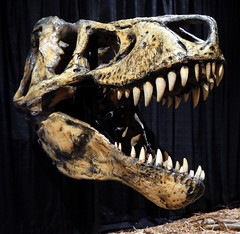 Black Flag of Dread Pirate T-Rex (subarcticmike) Tags: cretaceous montana trex skull dynamicearth travelling roadshow fossils geology geoscience display subarcticmike geotagged 6ws sixwordstory sudbury ontario canada tyrannosaurus rex transcanada hwy highway piratetalk talklikeapirate swag pirate