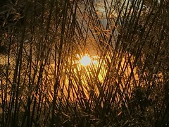 A Sunset Weave (beckygiovine) Tags: grasses wild course golf bay chambers glow sunset pacificnorthwest lightplay nature creative light bright yellow sun sky shadows grass woven weave