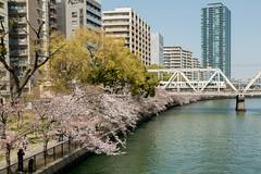 Osaka (Cliff Kimura) Tags: sakuranomiya sakura osaka asia japan travel