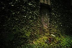 sweet childhood (Goddl) Tags: dreirad natur farn verlassen tricycle nature fern leave