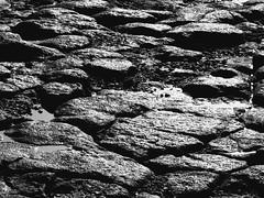ARRECIFE LANZAROTE LOW TIDE  PORT BLACK AND WHITE (patrick555666751 THANKS FOR 5 000 000 VIEWS) Tags: arrecife low tide lanzarote port black and white pierre stone piedra arrecifelanzarotelowtideportblackandwhite puerto lancerotte atlantic atlantique atlantico espagne espana spain spania spanien canary canarias canaries islas iles ilhas islands europe europa macaronesia flickr heart group blanc i negre blanco y negro bianco e nero preto branco schwarz und weiss noir et patrick roger patrickroger patrick555666751 patrick55566675 island kanarische inseln