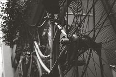 Moe (Yosh the Fishhead) Tags: olympus olympus35dc 35dc 40mm film bw blackwhite blackandwhite monochrome foma fomapan200 pushprocess pushprocessed tokyo japan bike bicycle wheel dof bokeh