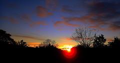 When I look out my WINDOW.... (Lani Elliott) Tags: nature naturephotography lanielliott sky skies cloud clouds silhouette silhouettes sun light sunrise trees scene scenic scenictasmania hobart tasmania bright radiant fantastic wonderful beautiful