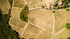 Fields lines