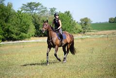 Cross Country Riding (shirley319) Tags: d600 erica kfjonesclinic kane paradeuxfarms thoroughbred crosscountry equestrian horse hunterjumper wapella illinois unitedstates