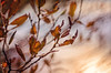 Autumn leafs (Pásztor András) Tags: autumn leafs leaflets tree dof shallow blured background manual lens meyeroptik diaplan80mm f28 projection red brown blue sky sun light nature dslr nikon d5100 hungary andras pasztor photography 2017
