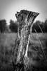 Tree stump (FSR Photography) Tags: fsrphotography de deutschland schärfentiefe reisefotographie vignette outdoor licht sw light bw moor schatten baumast blackandwhite einfarbig blackwhite schärfe ast schwarzweiss flickr whiteblack trees reise tree contrast baum monochrome travelling travel shadows monochrom bnw kontrast canon fsr canon400d lightroom fv10