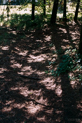 Crescent-shaped dappled light (Taomeister) Tags: fujicolorindustrial100 nikonfm3a 業務用100 voigtlanderultronslii40mmf2