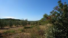 Umgebung Rovinj (Timm aus Kiel) Tags: istra istria croatia kroatien limfjord limski rovinjkroatien sony xperia xz