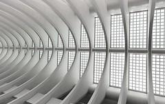 skeleton (Fotoristin - blick.kontakt) Tags: architecture station liège belgien lüttich belgium liègeguillemins calatrava curves lines repetitions abstract blackandwhite roof glas concrete skeleton fotoristin