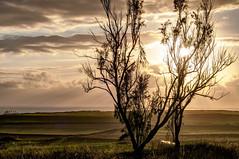 Tarde de verano en la costa (ccc.39) Tags: asturias gozón cantábrico costa atardecer ocaso sunset sea seascape mar verano