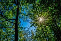 Star Shining Bright Above You (Rice Bear) Tags: emiliaromagna italy porticodiromagna punkdomesticstour blue forest leaves sky sun sunstar trees 2015vacation villaggiomontebusca it