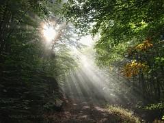 Sonnenstrahlen im Wald (NatureArt by Wolfgang) Tags: sunlight sunray sunbeam sonnenstrahlen sony xperia xz premium forest wald sonnenaufgang nebel fog mist waldweg sunrise herbst autumn fall