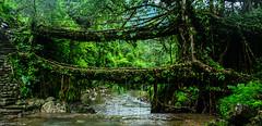 Meghalaya 2016 Monsoons (jjamwal) Tags: meghalaya india monsoon travel forest greenery nature