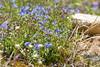 DSC_2271 (d90-fan) Tags: rauris raurisertal hohetauern nationalpark npht salzburgerland österreich austria nature alps alpen mountains gebirge animals