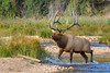 Making A Splash (Amy Hudechek Photography) Tags: wildlife bull elk water stream rut splash nature rocky mountain national park colorado amyhudechek nikond500 nikon 200500 f56