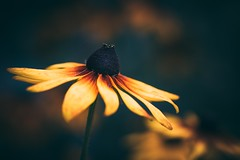 For Funda (--StadtKind--) Tags: macro macrophotography nature naturephotography manuallens primelens stadtkind alphaddicted sonyalpha doflicious dof bokehlicious bokehaddicts bokeh blüte fleur flower