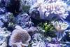 001097-P2188391 (aussiephil1960) Tags: em12 em1markii sydneyaquarium fish olympuszd1260mmf2840