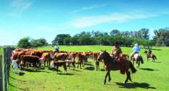 Cruz de los Caminos, Uruguay (Eduardo Amorim) Tags: gaúcho gaúchos gaucho gauchos cavalos caballos horses chevaux cavalli pferde caballo horse cheval cavallo pferd cavalo cavall馬 حصان 马 лошадь gado ganado cattle bétail bestiami vieh vaca cow vache mucca kuh boi buey ox boeuf mue rind vacas cows vaches mucche kühe bois bueyes oxen boeufs buoi cuchillacaraguatá cruzdeloscaminos tacuarembó uruguay uruguai sudamérica südamerika suramérica américadosul southamerica amériquedusud americameridionale américadelsur americadelsud ঘোড়া 말 סוס ม้า häst hest hevonen άλογο eduardoamorim pampa pampauruguaya campaña campañauruguaya