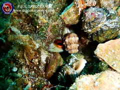 """Kalymnos Diving • <a style=""""font-size:0.8em;"""" href=""""http://www.flickr.com/photos/150652762@N02/36068130860/"""" target=""""_blank"""">View on Flickr</a>"""