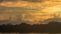 rotina de xexéu (Thiago Orsi) Tags: amazon amazonia rondonia barranco calama crepusculo dusk entardecer floodedforest floresta florestaalagada forest madeira pordosol rio riomadeira river sol sun sunset varzea vila