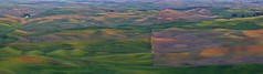 Late Afternoon on the Palouse Panorama (Alan Amati) Tags: amati alanamati america american usa us wa wash washington palouse thepalouse colfax steptoe steptoebutte butte park state lateafternoon panorama field fields farm farms terrain topography hills rolling dimples dimpled landscaape wheat agriculture spring