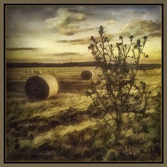 Rural landscape. (odinvadim) Tags: mytravelgram paintfx textured textures iphone editmaster travel iphoneography sunset evening iphoneonly painterly artist snapseed landscape photofx specialist iphoneart graphic painterlymobileart