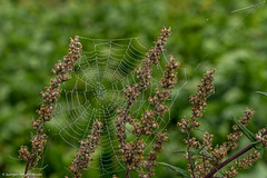 Spinnennetz mit Morgentau (J.Weyerhäuser) Tags: mainz laubenheimerhöhe spinnennetz nebel felder morgentau netz
