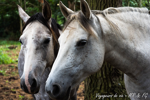 """Compagnons de prairie • <a style=""""font-size:0.8em;"""" href=""""http://www.flickr.com/photos/151667760@N04/36253858554/"""" target=""""_blank"""">View on Flickr</a>"""