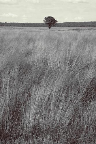 an ocean of grass