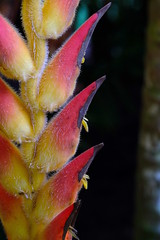 Exotic Nature (PSKimages) Tags: australia cairns tropical flora nature cute n quirky