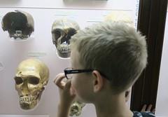 (andrew gallix) Tags: hornimanmuseum london alfie skulls