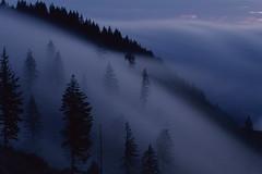 Flow (voetshy) Tags: provia 100f 35mm film slide oregon pentax lx 50mm 12 logging forest state trees fog sunset rolling