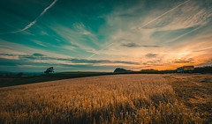 Dawn Harvest (Explore 15/09/17) (RTA Photography) Tags: rtaphotography barley barleyfield dawn sunrise light golden colours sky clouds shadows nikond7000 sigma1020mm456exdchsm landscape