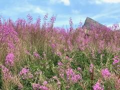 (CANETTA Brunello) Tags: natura fiori