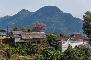 doi tung - thailande 56