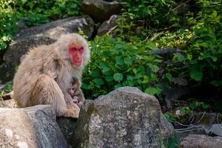 Baby monkey @ Japan