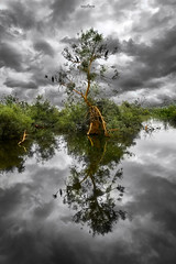 playing with card of nature (dim.pagiantzas   photography) Tags: card playing nature natural landscape waterscape water trees green plants reflections sky clouds cloudy atmospheric lakes light colors birds animals outdoor