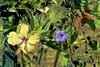 Flowers of Fiji! (maginoz1) Tags: flowers fiji abstract art august 2017 tropicalisland manipulate canon g3x