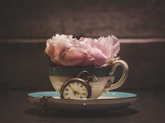 Pinky (Pilleluringen) Tags: flower peony pink cup pocketwatch time wood texture depthoffield sweden concrete closeup indoor old petal pastel lights leaves kreativ macroflowerlovers