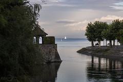 Im Stadtgarten von Konstanz am Bodensee    In the urban park of Constance at Lake Constance (*Photofreaks*) Tags: adengs wwwphotofreakseu bodensee deutschland germany evening moody abendstimmung lakeconstance badenwürttemberg sunset sonnenuntergang stadtgarten segelboote boats sailing